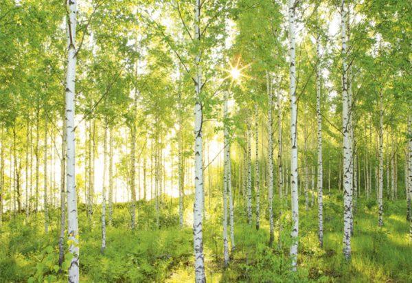 Painel Fotográfico de Floresta Verdejante