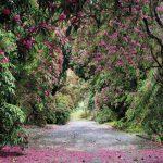 Painel Fotográfico Caminho Florido - Jardim Botânico