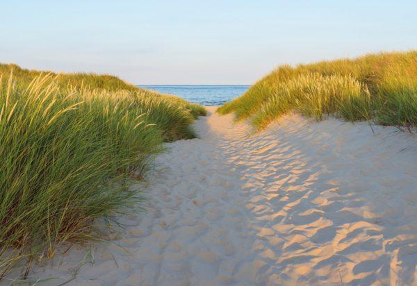 Painel Fotográfico Caminho para o Mar