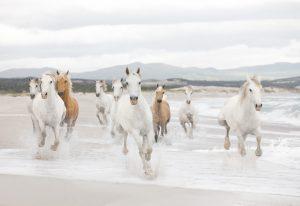 Painel fotográfico com cavalos branco correndo