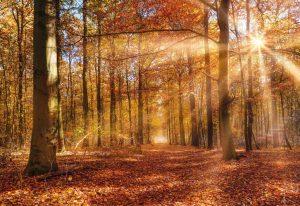 Painel Fotográfico Floresta