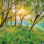 Painel Fotográfico Floresta com Lago Ref. 8-524