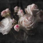 Painel Fotográfico Rosas Brancas Ref. 4-876