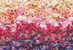 Painel Fotográfico Parede de rosas coloridas