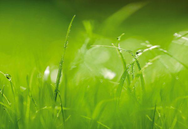 Painel Fotográfico campo verdejante - 8-886