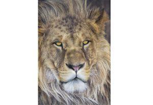 Painel Fotográfico com imagem de Leão - 1-619
