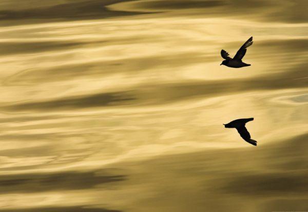 Painel Fotográfico Passáros sobre o mar - 1-604