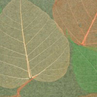 Palha Natural Folhas Secas - Y204